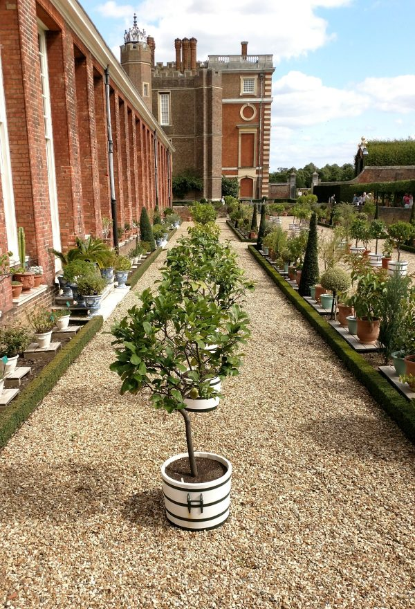 Exotic Plants gardena at Hampton Court